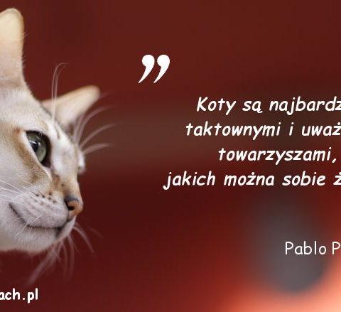 Cytaty o kotach - Pablo Picasso