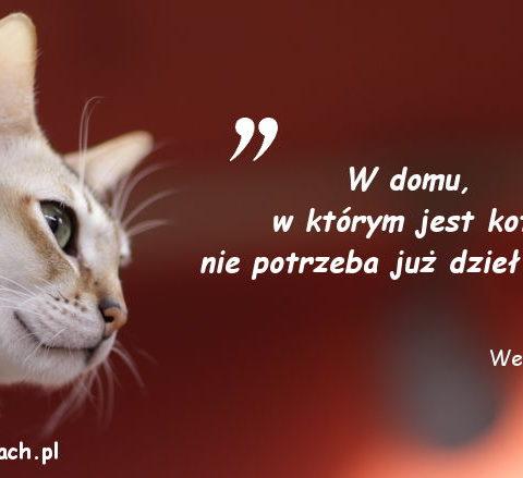 Cytaty o kotach - Wesley Bates