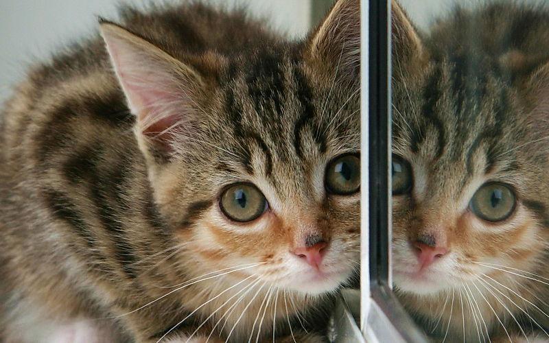 Czy kot widzi siebie w lustrze?