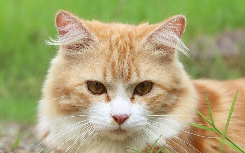 """Dlaczego kot ma """"M"""" na czole?"""