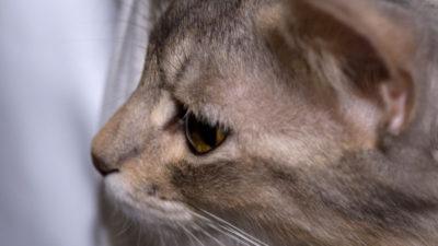 Sepiolitowe żwirki dla kotów