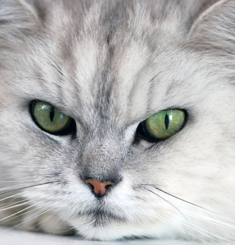 Zeolitowe żwirki dla kotów