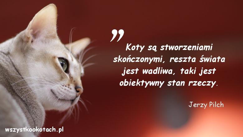 Cytaty o kotach - Jerzy Pilch
