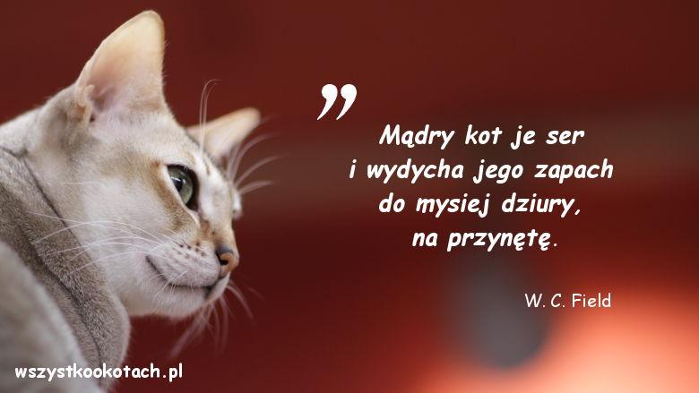 Cytaty o kotach - W. C. Field