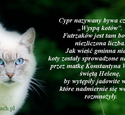 Cypr - Kocia wyspa
