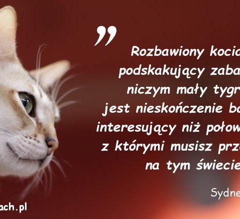 Cytaty o kotach - Sydney Morgan