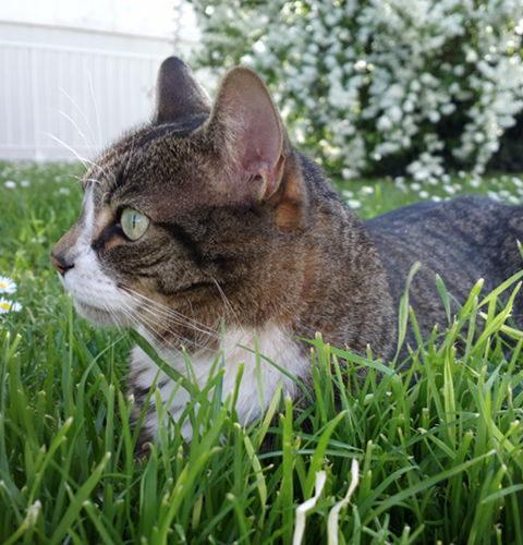 Zespół Nabytego Niedoboru Immunologicznego Kotów (FAIDS)