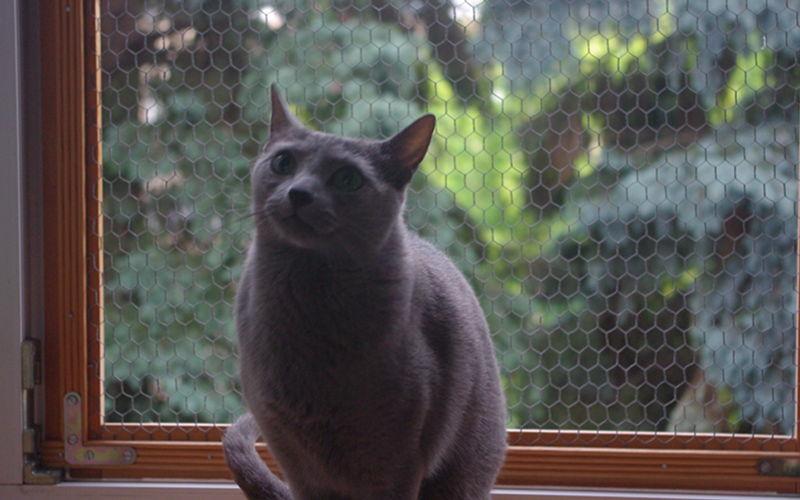 Okna i balkony bezpieczne dla kota – Jak uchronić pupila przed wypadkiem?