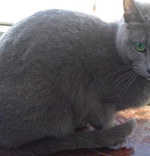 Sucha karma Oven-Baked Tradition dla kota