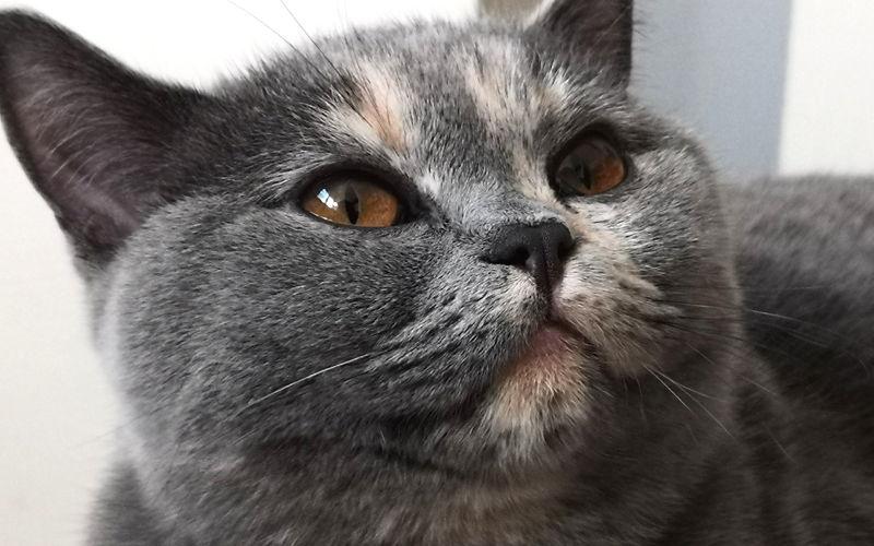 Układ linii papilarnych na opuszkach palców jest unikalny dla każdego człowieka. Dlatego możemy identyfikować przestępców na podstawie odcisków palców. Okazuje się, że nasze koty także posiadają coś w rodzaju linii papilarnych, tyle że nie znajdują się one na palcach lecz... na ich nosach. Kocie nosy jak opuszki palców u ludzi Nieowłosiony czubek nosa kota nazywamy lusterkiem. Jeśli dokładnie mu się przyjrzeć, można zauważyć szereg bruzd, którymi jest poprzecinany. Okazuje się, że każdy futrzak ma inny układ tych bruzd. Koty różnią się nimi jak ludzie różnią się liniami papilarnymi. Oznacza to, że możliwa byłaby identyfikacja kotów po odciskach ich lusterek nosa. Tekst: Jacek P. Narożniak Zdjęcie; Pixabay.coom