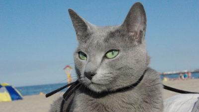 Wakacje z kotem