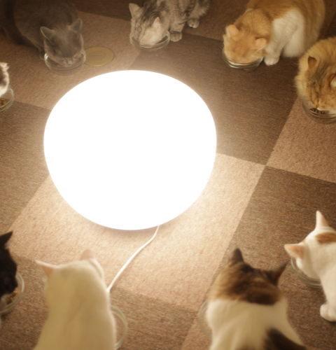 Czym różnią się od siebie karmy dla kotów: standardowe, premium i super premium?
