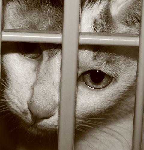 Schronisko dla zwierząt – To nie miejsce dla kota!