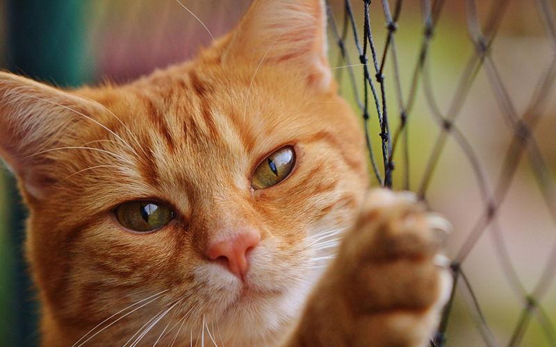 Koty wybredne – Jak to z nimi jest naprawdę?
