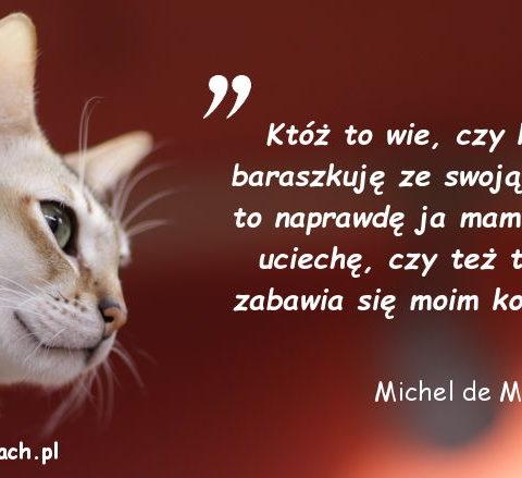 Cytaty o kotach - Michel de Montaigne