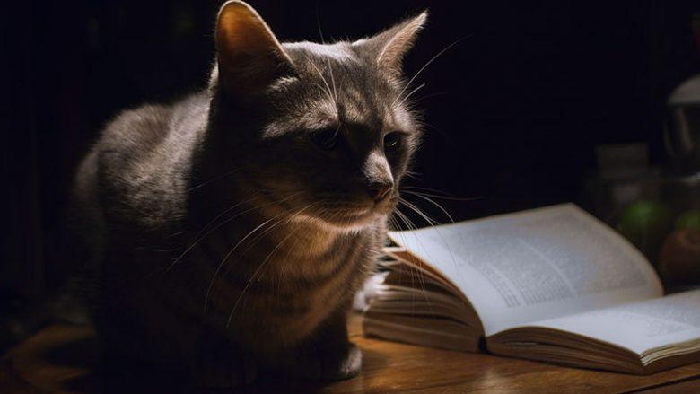 Czy kot widzi w absolutnych ciemnościach?
