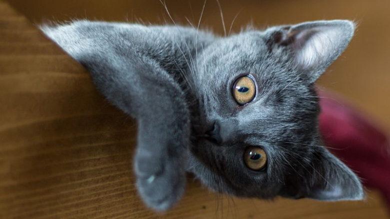 Dieta BARF dla kota