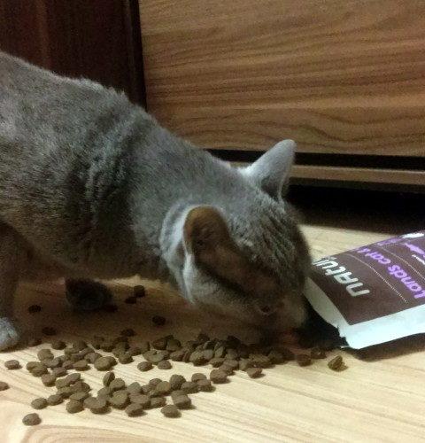 Sucha karma Naturea Lands dla kotów