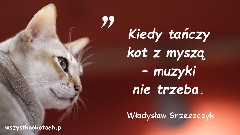 Cytaty o kotach - Władysław Grzeszczyk