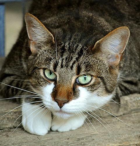 Instynkt samozachowawczy u kotów