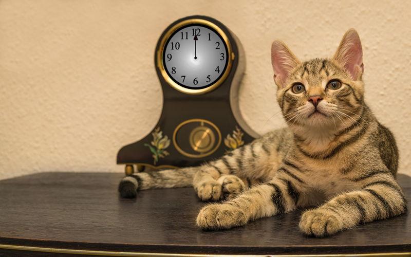 Jak pomóc kotu przetrwać sylwestrową noc?