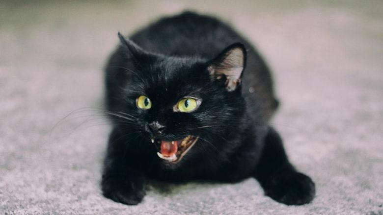 Koci język – Co znaczą wydawane przez koty dźwięki?