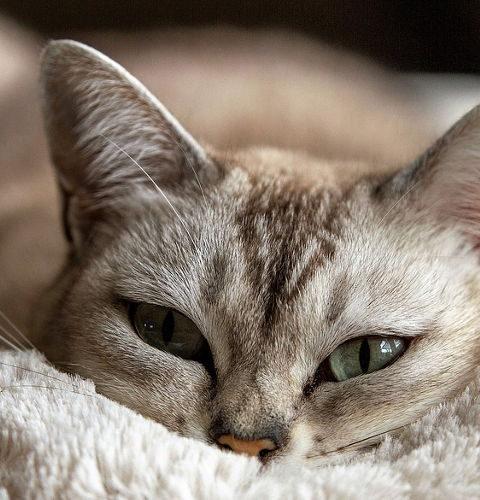 Białko w diecie kotów