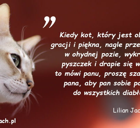 Cytaty o kotach - Lilian Jackson Braun