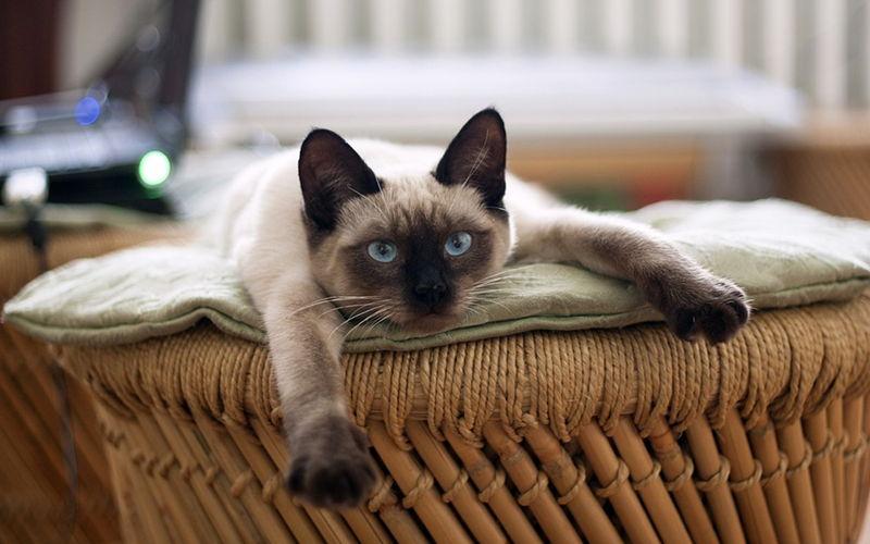 Na co zwracać uwagę, wybierając karmę dla kota?