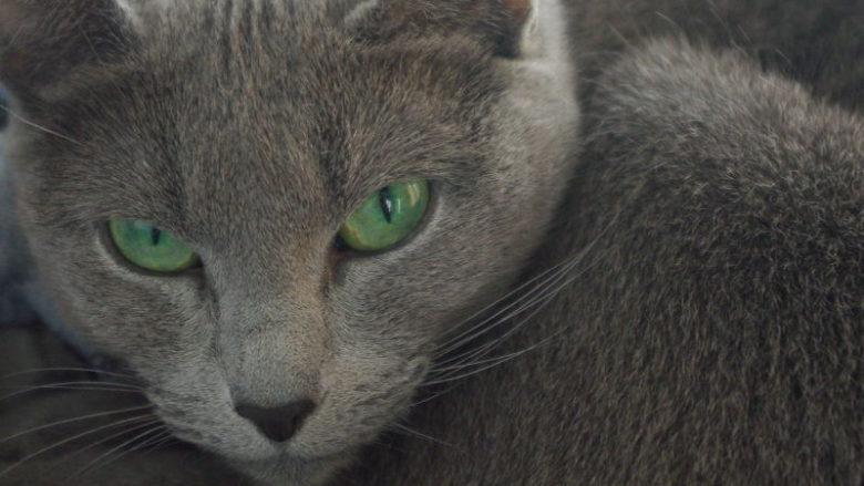 Posypka do kuwet dla kotów, Inodorina Deo Lettiera