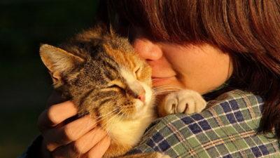 Błędne tłumaczenia składu karm dla kotów...