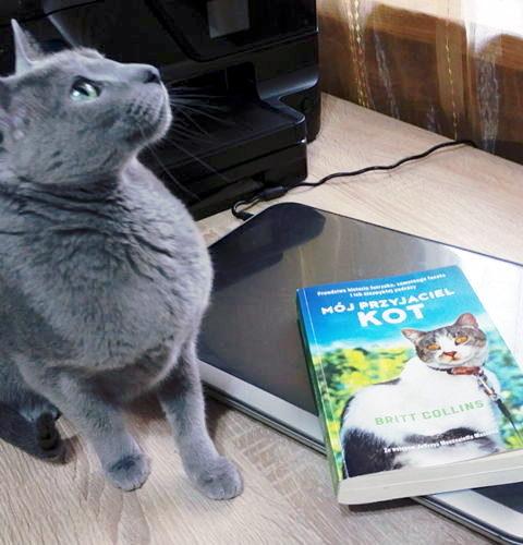 """Britt Collins """"Mój przyjaciel kot"""" - Książka o niezwykłej przyjaźni!"""