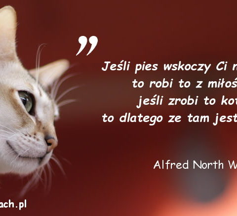 Cytaty o kotach - Alfred North Whitehead