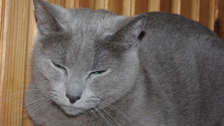 Mokra karma Feline Porta 21 Nature Sensible dla kotów