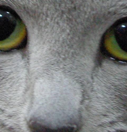 Chusteczki pielęgnacyjne Inodorina dla kotów