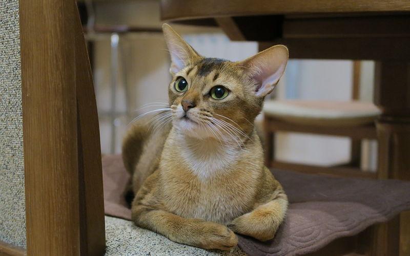 Suche karmy dla kotów