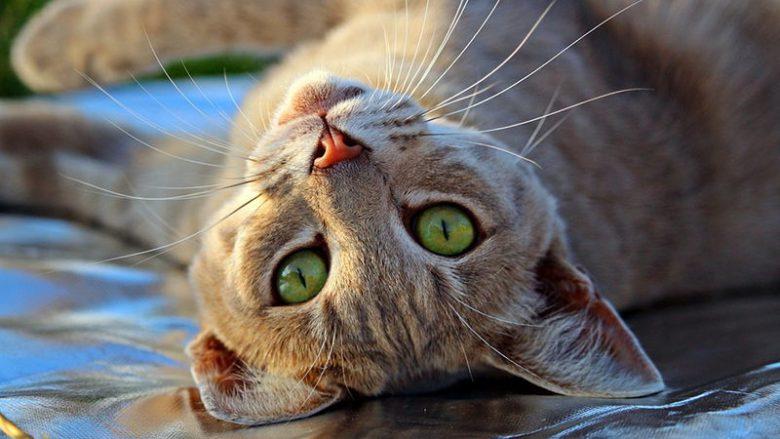 Brak pewnych enzymów u kotów