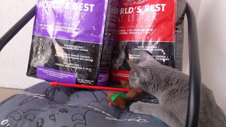 Kukurydziany żwirek World's Best Cat Litter dla kotów