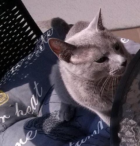 Mokra karma mEATzie dla kotów