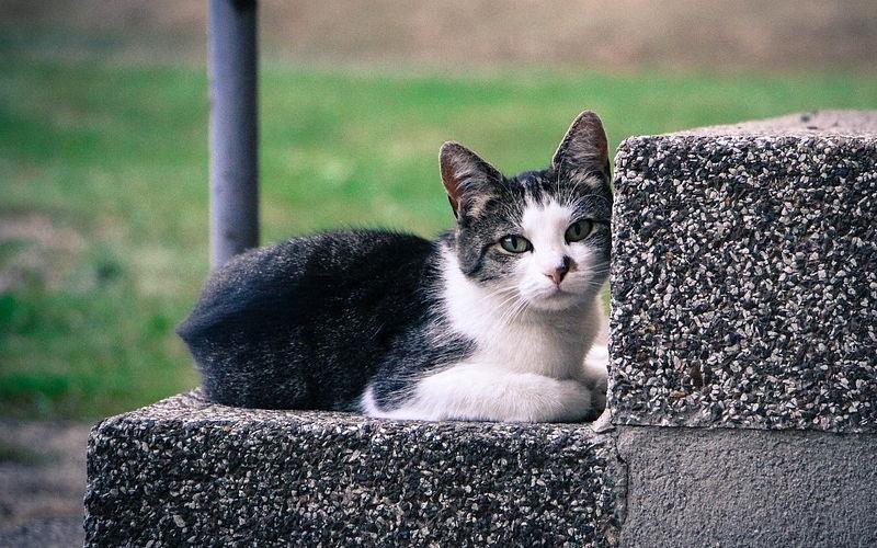 Świerzbowce u kotów