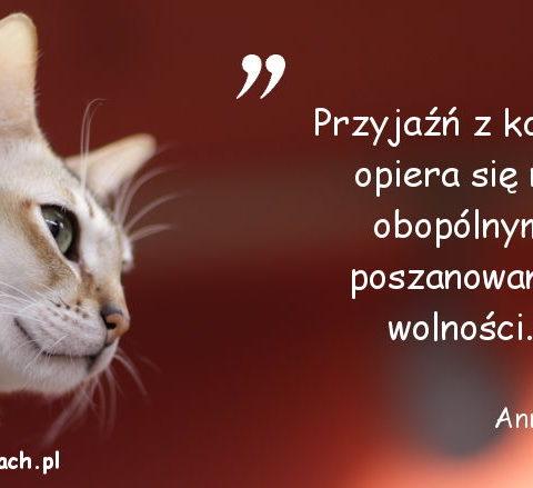 Cytaty o kotach - Anna Dymna