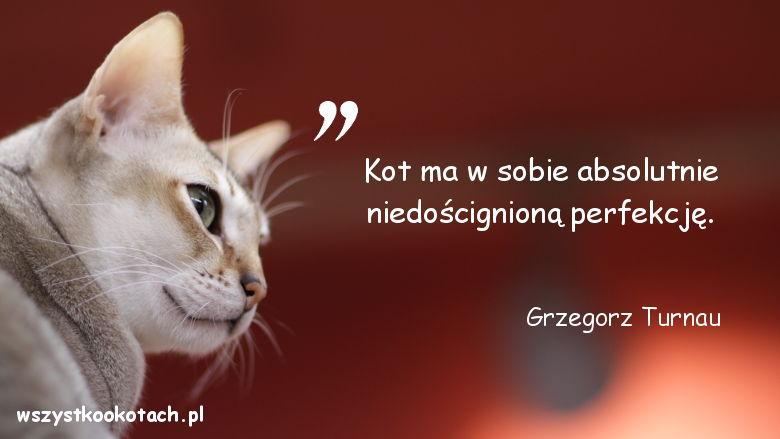 Cytaty o kotach – Grzegorz Turnau
