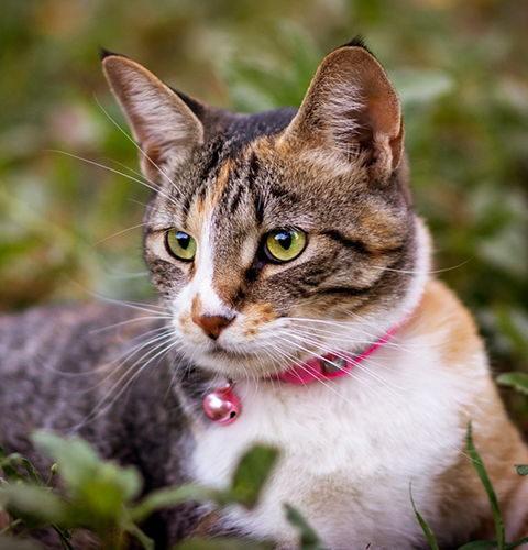 Zabójcze szelki i obroże dla kotów!