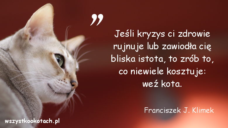 Cytaty o kotach - Franciszek J. Klimek