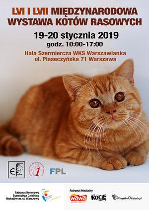 Wystawa Kotów Warszawa Styczeń 2019