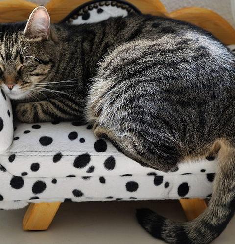 Jak wybrać odpowiednie legowisko dla kota?