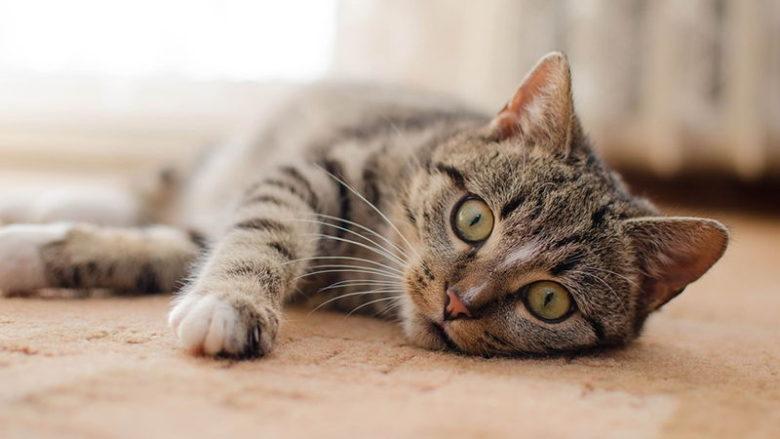 Brak apetytu u kota. Co zrobić, gdy kot nie chce jeść?