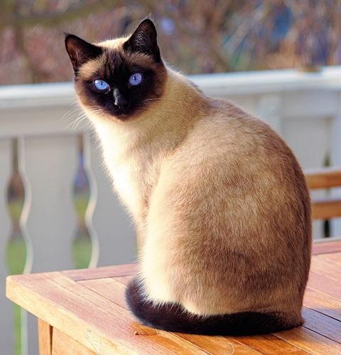 Jak czytać etykiety karm dla kotów?