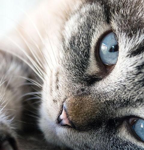 Jak i dlaczego koty reagują na kocimiętkę?