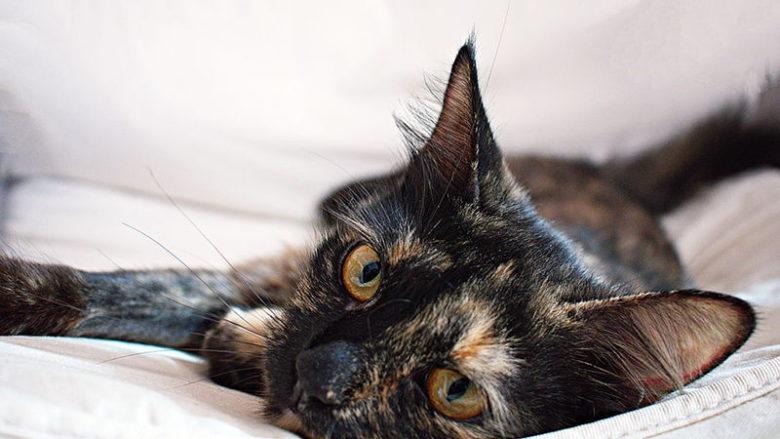 Czy koty płaczą?
